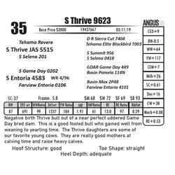 S Thrive 9623