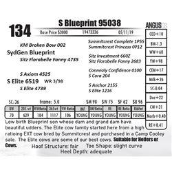 S Blueprint 95038