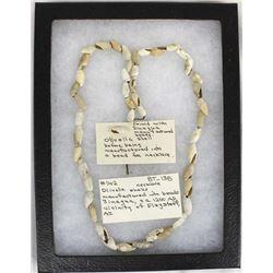 Prehistoric Sinagua Culture Olivella Shell Beads