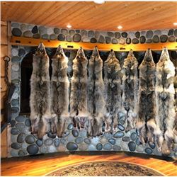 """""""Pick of the Pack"""" - WSSBC Legacy Wolf Hide Auction"""