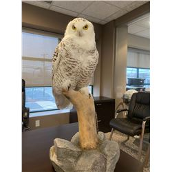 Snowy Owl Mount