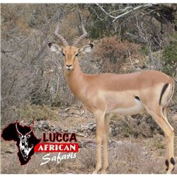 7- Day Safari for Two Hunters w/ Lucca African Safaris