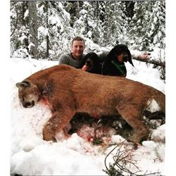 8 Day British Columbia Cougar, Bobcat & Lynx Hunt with Saddle Axe Outfitters