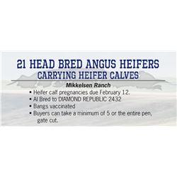 21 Head bred Angus Heifers carrying Heifer Calves