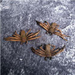 Arachnophobia - Prop Spiders - A571