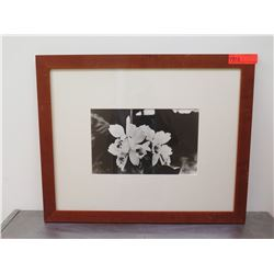 Framed Black & White Photographic Print - Orchids
