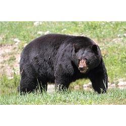 North Carolina Black Bear Hunt for 2