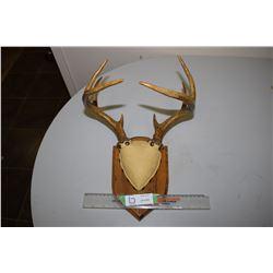 3 Point Buck Deer Horns