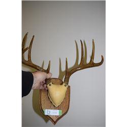 3 Point Buck Deer Horns - Whitetail