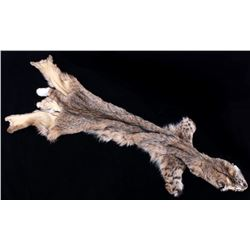 Montana Bobcat Trophy Taxidermy Fur Hide