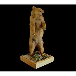Full Brown Bear Taxidermy Trophy Mount