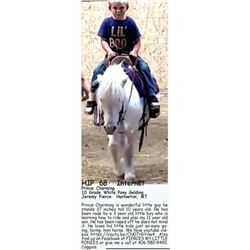 Prince Charming - 10 Grade White Pony Gelding