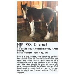 Ben - 12 Grade Bay Clydesdale/Gypsy Cross Gelding