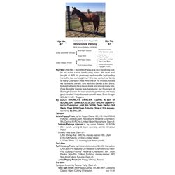 Boonlites Peppy - 2018 Sorrel Gelding (5978539)
