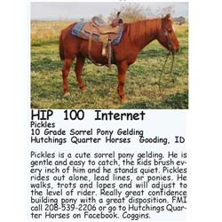 Pickles - 10 Grade Sorrel Pony Gelding