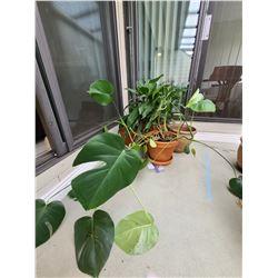 Plants A