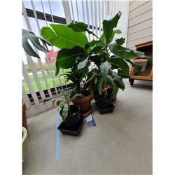 Four plants A