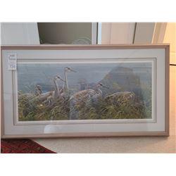 Young Sandhills Cranes A