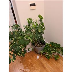 Indoor plants Cat A