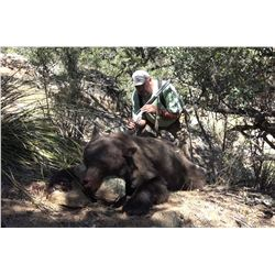 New Mexico Black Bear hunt with Hounds