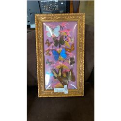 VINTAGE MADE IN BRAZIL BUTTERFLY DISPLAY