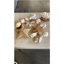 LOT OF CORAL, GEODES, STARFISH, ETC