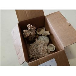 BOX OF CORAL AND SHELLS