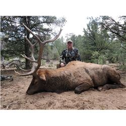 5 day - New Mexico Elk, Mule Deer, and Black Bear Archery Combo Hunt for 2 hunters