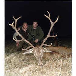 2 day/2 night - Iberian Red Deer Hunt near Toledo, Spain for 1 Hunter