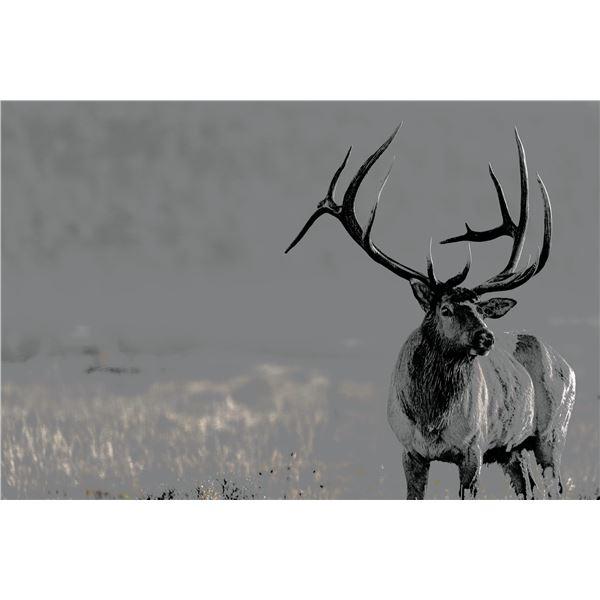 """""""Midas"""" Elk Painting"""