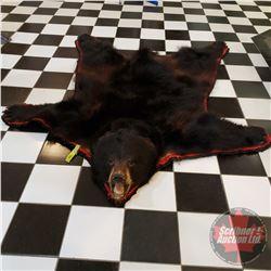 Black Bear Rug (Measurement in Pics)