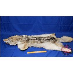 Coyote Rug (Measurement in Pics)