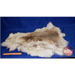 Fur Hide (Measurement in Pics)