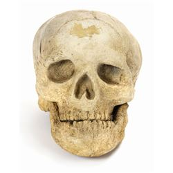 Jungle Cruise Skull Prop.