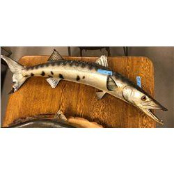 Wall mount Barracuda