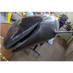 16ft Killer Whale Black