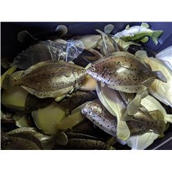 Bin of Flounder Fish Prop Silicon