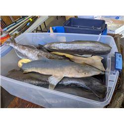 Miscellaneous Latex Fish, Star Fish, Shrimp