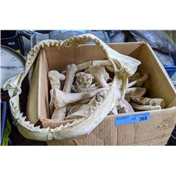 Movie Prop Styrofoam Bones