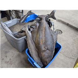 3 Buckets of Movie Prop Latex Fish