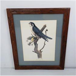 Joe Thornbrugh Montana Peregrine Falcon Print