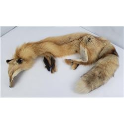 Montana Taxidermy Tanned Red Fox Hide