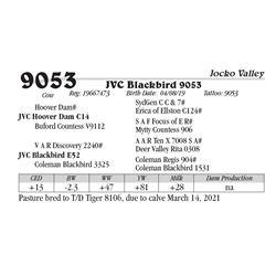JVC Blackbird 9053