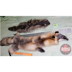 Pelts : Fox & Raccoon