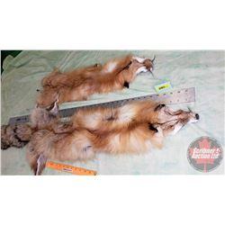 Pelts : Foxes (2)