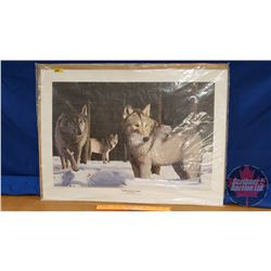 """Limited Edition Print """"Timber Wolf Alert"""" (579/5000) (22-1/2"""" x 31"""")"""
