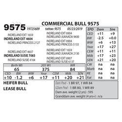 COMMERCIAL BULL 9575