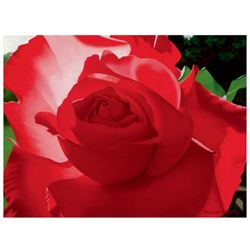 """Brian Davis, """"Brilliant Red Solo Rose"""" Limited Edition Giclee on Canvas, Numbere"""