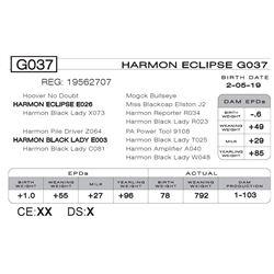 HARMON ECLIPSE G037
