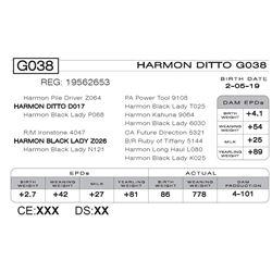 HARMON DITTO G038